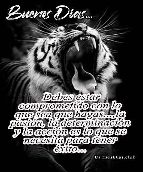 Mensaje de Buenos días tigre