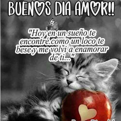 Mensaje de Buenos días amor gatito