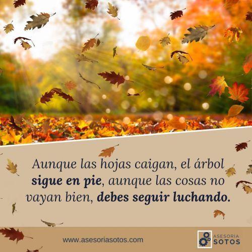 Frase de hojas que caen en otoño