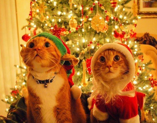 mensajes-gatos-navidad-2015