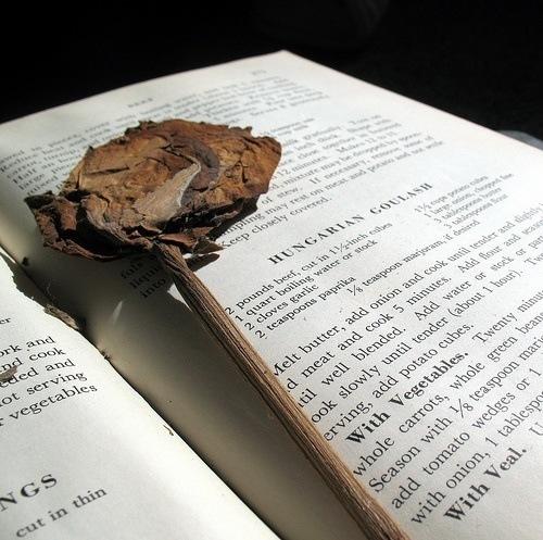 libro_rosa_seca